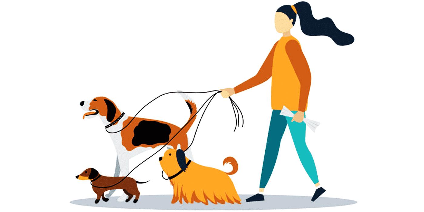 Soins et gestion des animaux